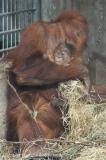 Zoo_Hannover_230813_IMG_4144