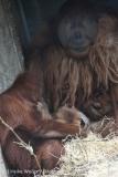 Zoo_Hannover_230813_IMG_4175