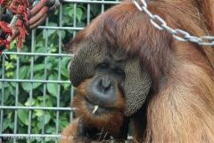 Zoo_Hannover_230813_IMG_4178
