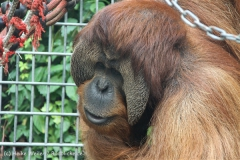 Zoo_Hannover_230813_IMG_4180