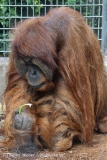 Zoo_Hannover_230813_IMG_4183