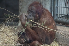 Zoo_Hannover_230813_IMG_4209