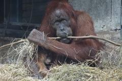 Zoo_Hannover_230813_IMG_4228