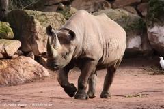 Zoo Hannover 231010- IMG100_9389