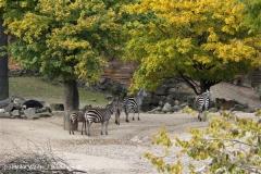 Zoo Hannover 231010- IMG100_9410
