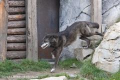 Zoo Hannover 231010- IMG100_9541