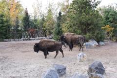 Zoo Hannover 231010- IMG100_9553
