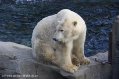 Zoo Hannover 231010- IMG100_9626