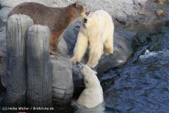 Zoo Hannover 231010- IMG100_9717