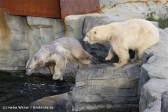 Zoo Hannover 231010- IMG100_9737