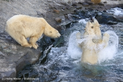 Zoo Hannover 231010- IMG100_9990