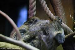 Zoo_Hannover_231215_IMG_2439