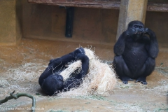 Zoo_Hannover_231215_IMG_2447
