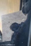 Zoo_Hannover_231215_IMG_2523
