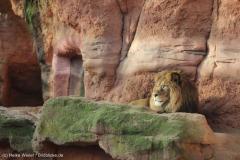 Zoo_Hannover_231215_IMG_2561