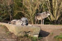 Zoo_Hannover_231215_IMG_2562