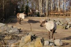 Zoo_Hannover_231215_IMG_2571