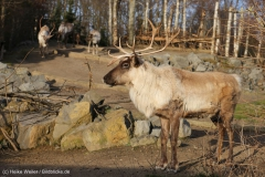 Zoo_Hannover_231215_IMG_2573
