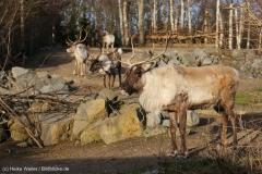Zoo_Hannover_231215_IMG_2578