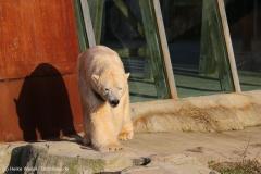Zoo_Hannover_231215_IMG_2587