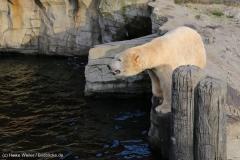 Zoo_Hannover_231215_IMG_2590