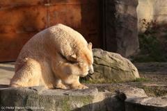 Zoo_Hannover_231215_IMG_2615
