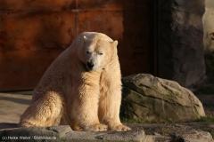 Zoo_Hannover_231215_IMG_2621