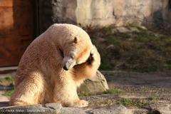 Zoo_Hannover_231215_IMG_2628