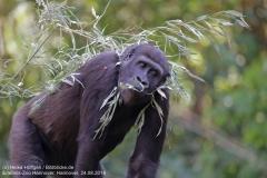 Zoo Hannover_240818_IMG_7436