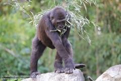 Zoo Hannover_240818_IMG_7440