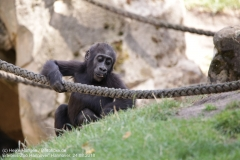 Zoo Hannover_240818_IMG_7445