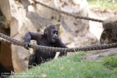 Zoo Hannover_240818_IMG_7448