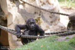 Zoo Hannover_240818_IMG_7449