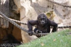 Zoo Hannover_240818_IMG_7451