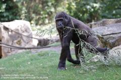 Zoo Hannover_240818_IMG_7457