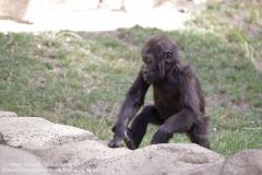 Zoo Hannover_240818_IMG_7468