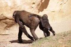 Zoo Hannover_240818_IMG_7491