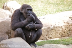Zoo Hannover_240818_IMG_7500