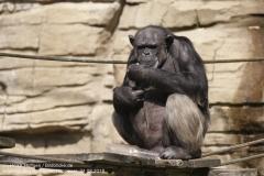 Zoo Hannover_240818_IMG_7504