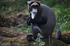 Zoo Hannover_240818_IMG_7521