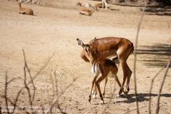 Zoo Hannover_240818_IMG_7543