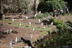 Zoo Hannover_240818_IMG_7547