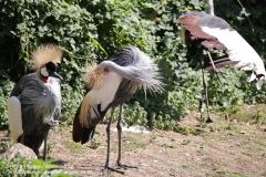 Zoo Hannover_240818_IMG_7548