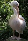 Zoo Hannover_240818_IMG_7551