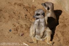 Zoo Hannover_240818_IMG_7561