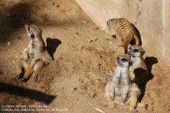 Zoo Hannover_240818_IMG_7562