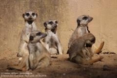 Zoo Hannover_240818_IMG_7565