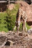 Zoo Hannover_240818_IMG_7568
