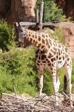 Zoo Hannover_240818_IMG_7574