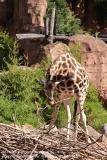 Zoo Hannover_240818_IMG_7576